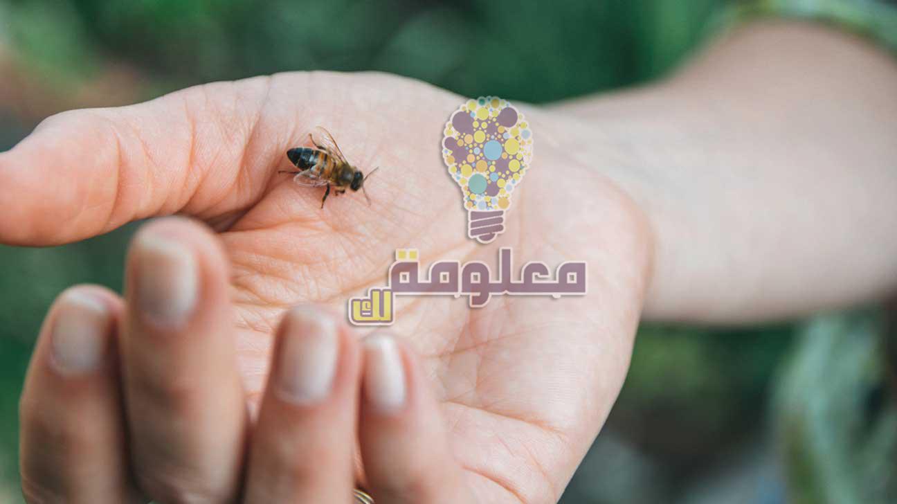 فوائد وأضرار قرصة و لسعة النحل بالتفصيل