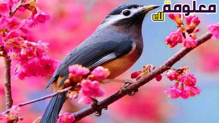 تفسير حلم رؤية الطيور الملونة في المنام