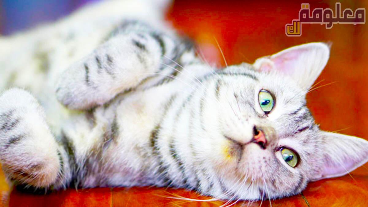 تفسير حلم رؤية قطة ميته سوداء في المنام